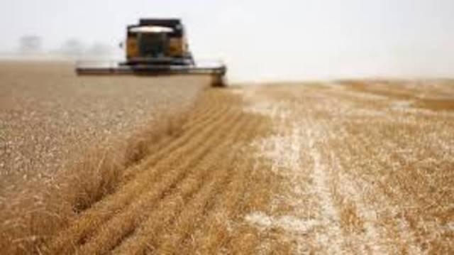 المطاحن الخاصة الإيرانية غير مسموح لها باستخدام القمح المحلي لصادرات دقيق القمح