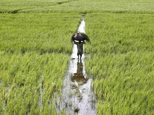 وادي كوم أمبو لاستصلاح الأراضي