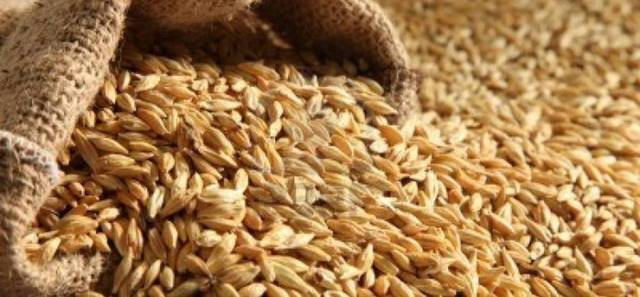 SAGO offers tender to buy 480K tonnes of feed barley