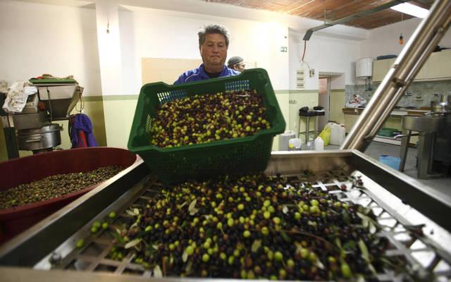 تصنيع الزيتون نشاط رئيسي بالشركة - الصورة من رويترز آربيان آي