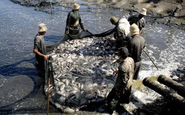 صيد الأسماك