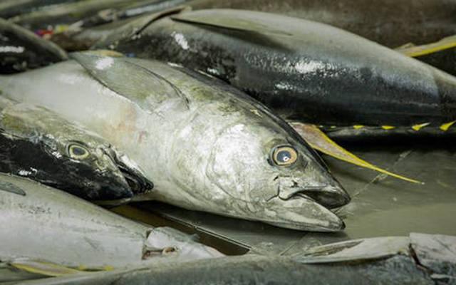 تعليب التونة داخل الشركة
