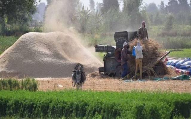 توقعات بتراجع حجم صادرات القمح الألمانية للسعودية