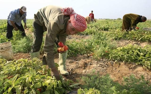 مزارعون بأحد الأراضي الزراعية