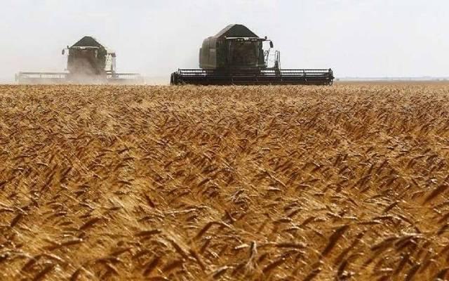 عمليات حصاد القمح