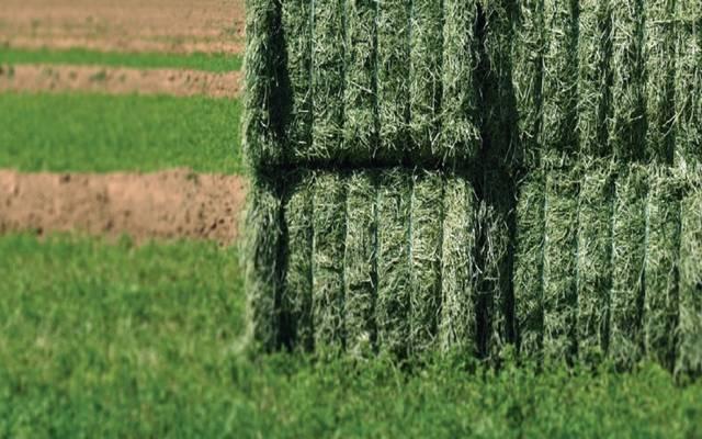 مزارع أعلاف خضراء