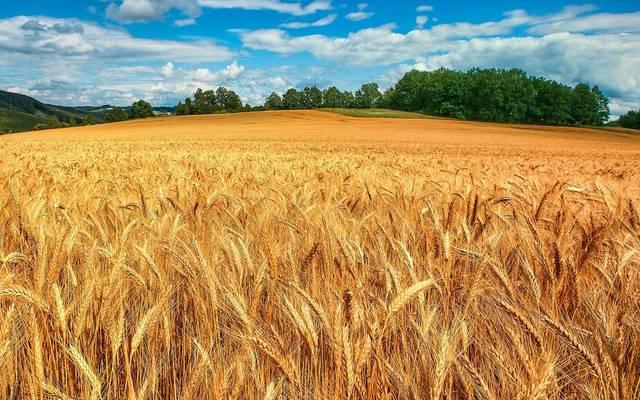 توقع التقرير أن تستورد مصر 300 ألف طن من الأرز
