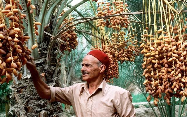 التمويل من خلال البنك التونسي للتضامن وجمعيات التمويل الصغيرة