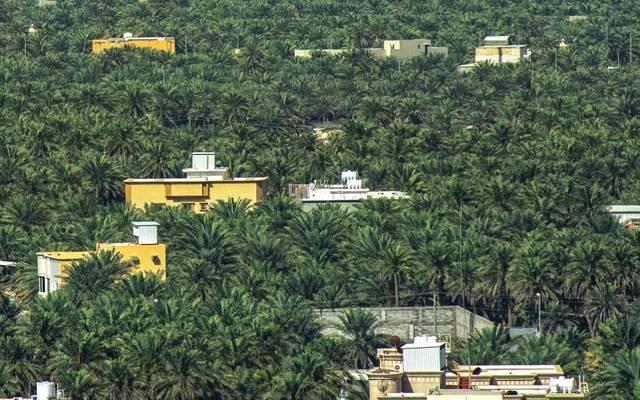 أكبر واحة نخيل في العالم بمدينة الأحساء السعودية