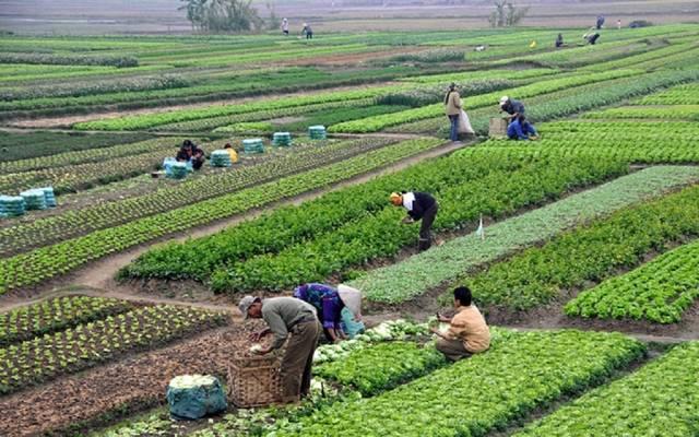 الحكومة تستهدف إستصلاح وزراعة 181.8 ألف فدان، وتدشين مصنع للسكر باستثمارات 450 مليون دولار