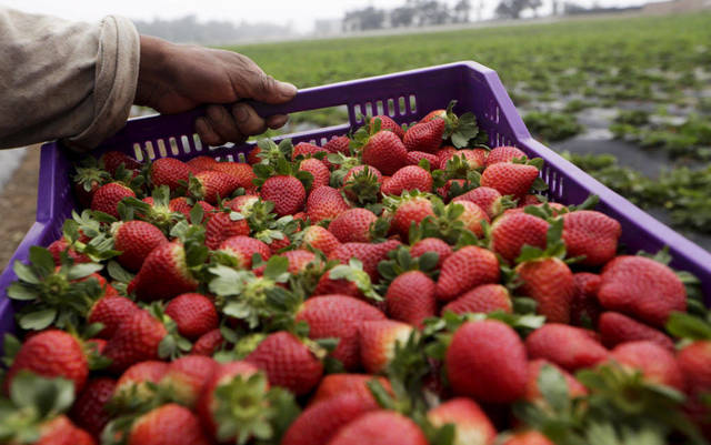 Saudi Arabia to lift ban on Egyptian strawberry exports