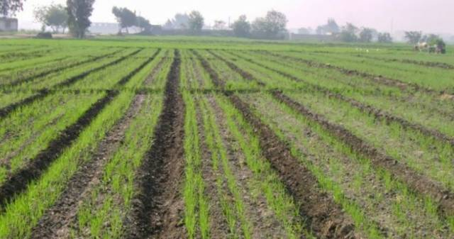 أراضي زراعية