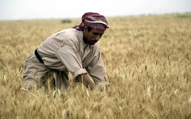 كميات القمح المستلمة ستشارف على المليون طن