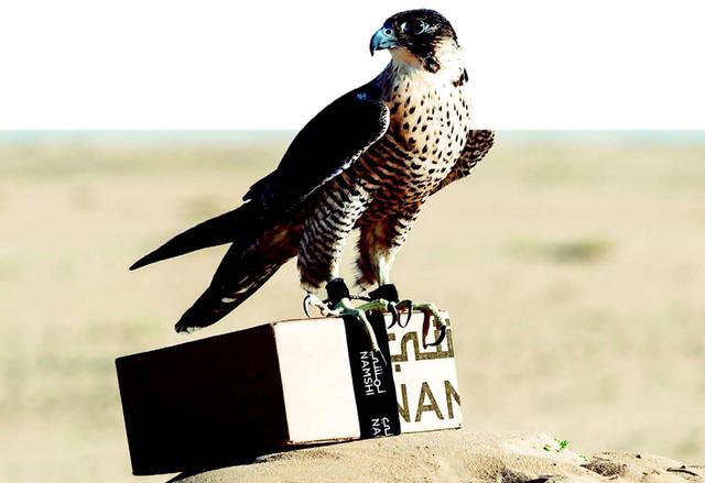 """طاقم """"نمشي"""" من الصقور،  يطير بسرعة 390 كم في الساعة، الصورة من المصدر"""