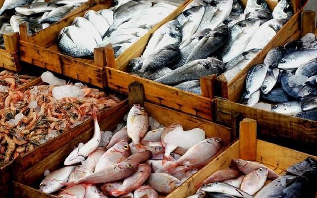 أسماك ـ أرشيفية