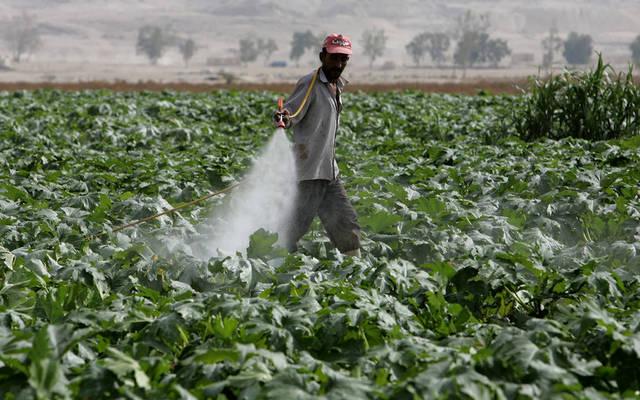 عمليات رش المبيدات بالطرق التقليدية في الأراضي الزراعية