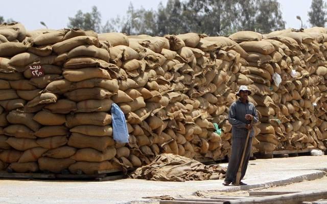 التموين المصرية: تقديم حوافز تشجيعية وأسعار منافسة لتوريد القمح المحلي