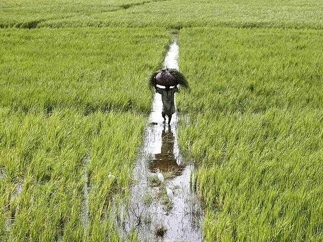 دعوى أطلس لاسترداد 11 مليون جنيه من الهيئة العامة لمشروعات التعمير والتنمية الزراعية