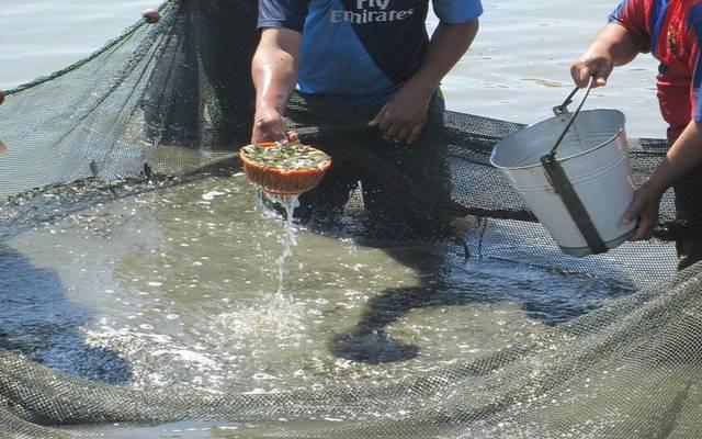 الاستزراع السمكي
