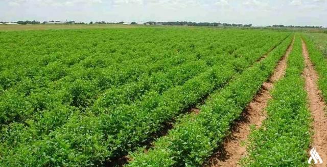 أراضٍ زراعية بالعراق