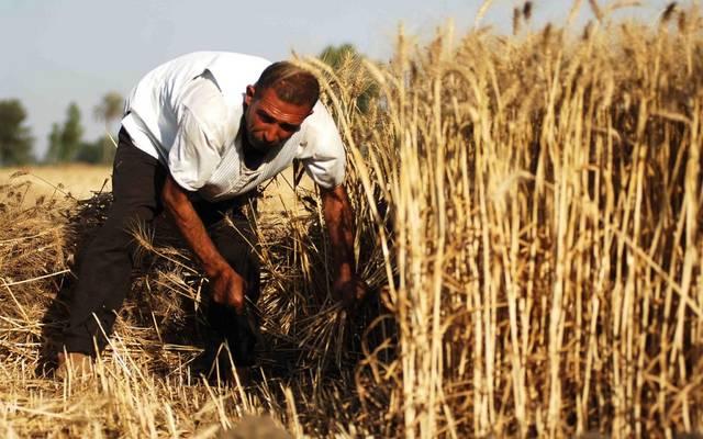"""""""التجارة العراقية"""" تمنع استلام القمح المحلي خارج قوائم وزارة الزراعة"""