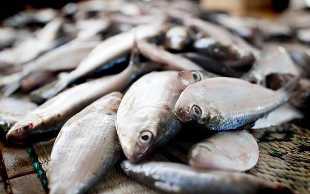 أسماك التونة بالأسواق العمانية