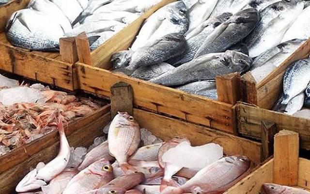 صادرات قطاع الصيد البحري بلغت 9.35 ألف طن بنهاية مايو