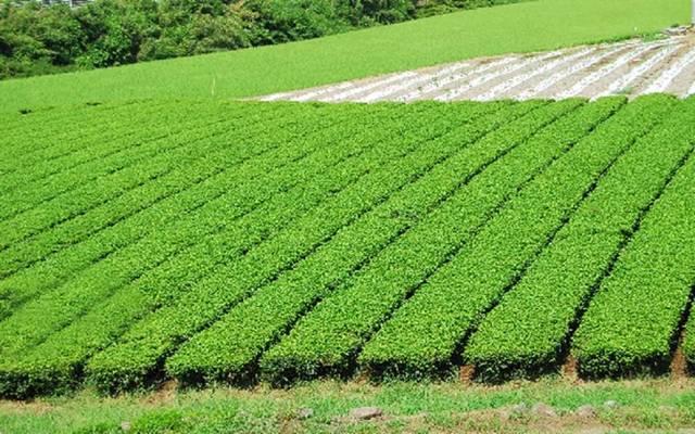 السعودية تقر ضوابط إيقاف زراعة الأعلاف الخضراء قريبا