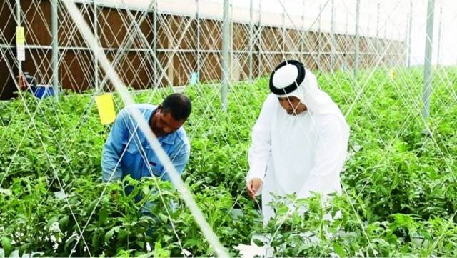 UAE banks have injected AED 500m in the agricultural sector