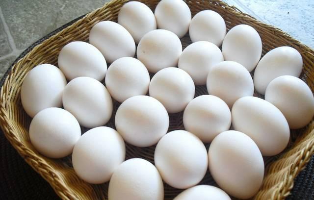 بيض المائدة