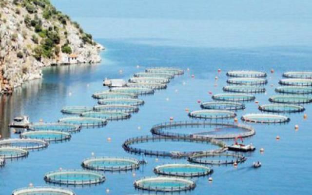 البيئة السعودية تطرح 20موقعاً استثمارياً للاستزراع المائي في البحر الأحمر
