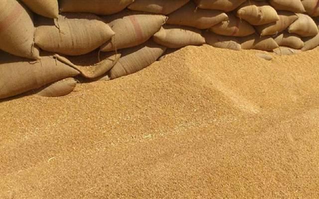 محصول العام الحالي يشمل 4.81 مليون طن من القمح اللين
