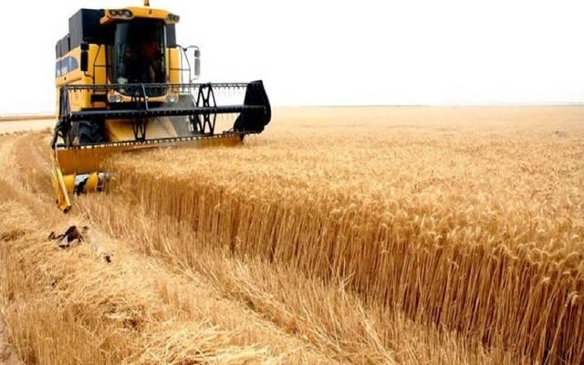 حصاد القمح في العراق ـ أرشيفية