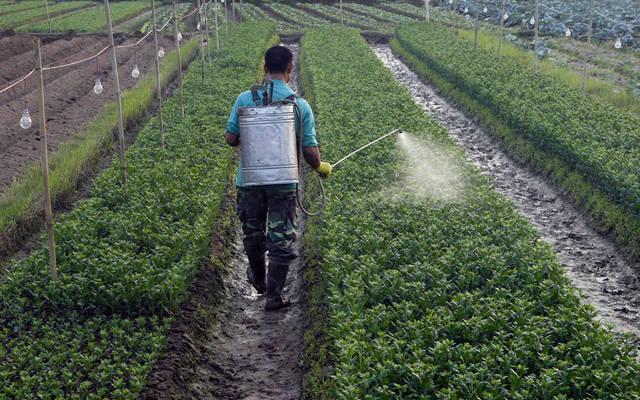 تعمل الشركة في إنتاج و تصنيع المبيدات الزراعية