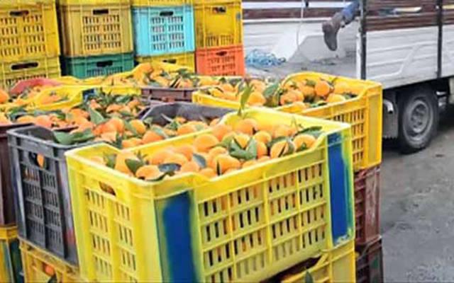 صادرات المواد الزراعية والبحرية ارتفعت 13% في 8 أشهر
