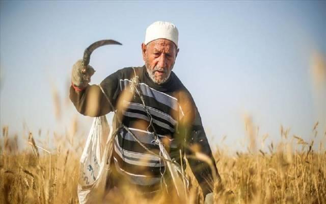 """""""التموين المصرية"""": نمتلك سعة تخزينية لـ4.2 مليون من القمح المحلي"""