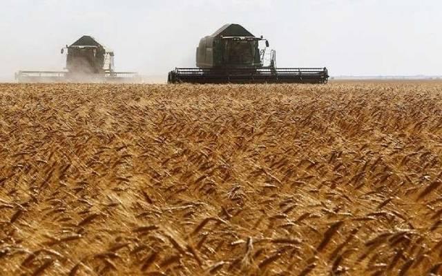 المناقصة طالبت شحن القمح الصلد خلال الفترة من 15سبتمبر إلى 5 نوفمبر