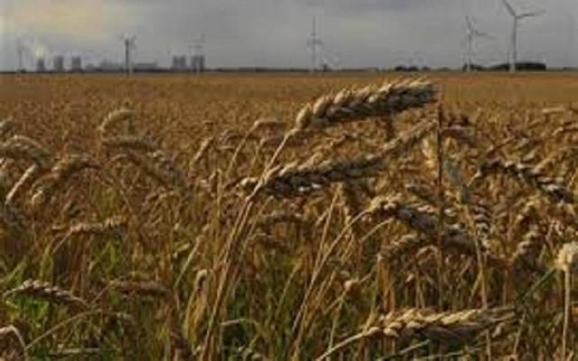 وزير: مصر تشتري القمح المحلي بـ570-600 جنيه للأردب