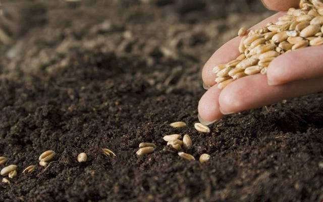 Misr Hytech has become a leading seed company in Africa