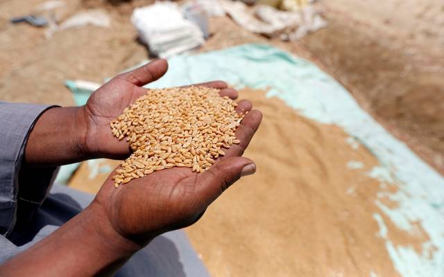 مصر تتسلم 3.2 مليون طن قمح محلي من المزارعين