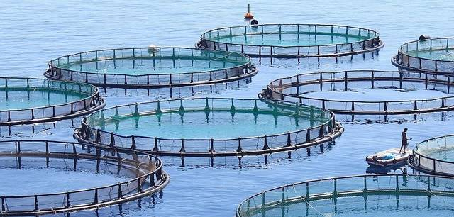 Sokotra Capital is leading a consortium to acquire a Tunisian fish farm