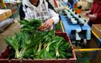 """استيراد وتصدير المواد الزراعية أحد أنشطة """"النخيل"""""""