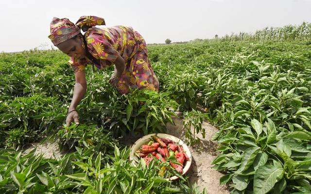 الزراعة في أفريقيا ـ أرشيفية