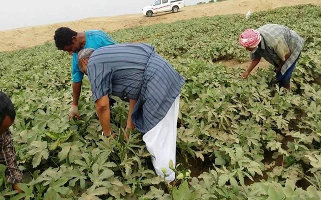 مدبولي: مصر بحاجة لـ18 مليار جنيه لاستبدال الأراضي الزراعية المفقودة منذ 2011