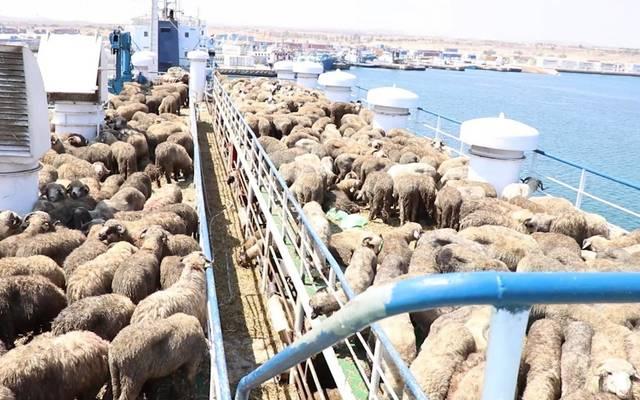 """سفينة جديدة تنضم إلى أسطول """"المواشي"""" الكويتية"""