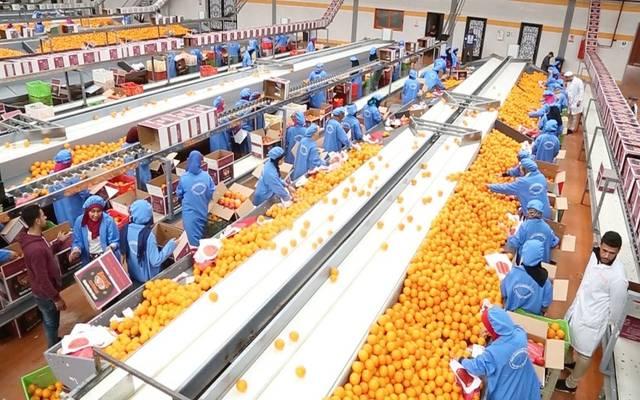 تجهيز البرتقال المصري للتصدير ـ أرشيفية