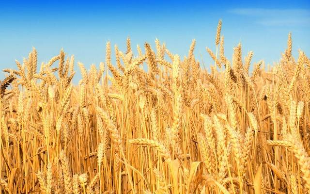 Total grain production dropped to 17.9 million tonnes