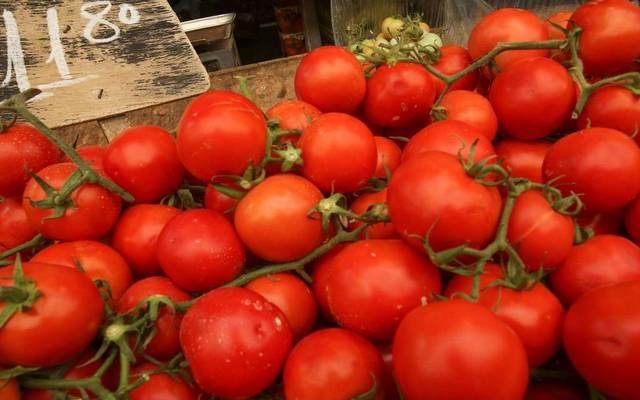محصول طماطم