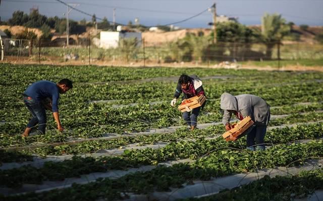 الزراعة المصرية تبحث مع الوكالة الألمانية للتنمية دعم صغار المزارعين