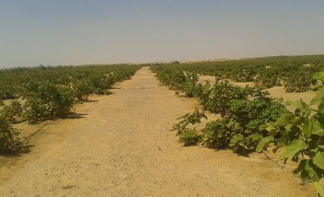 47.2 % زيادة في القروض الاستثمارية الممنوحة للمزارعين